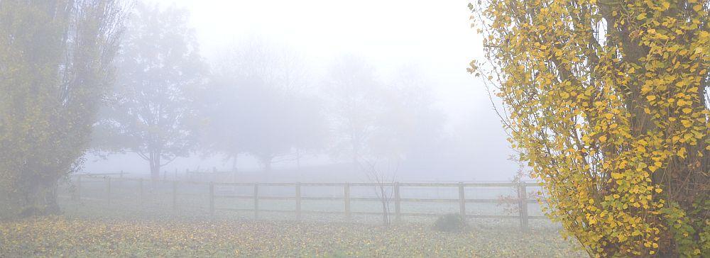 spooky-foggy-DSF1188