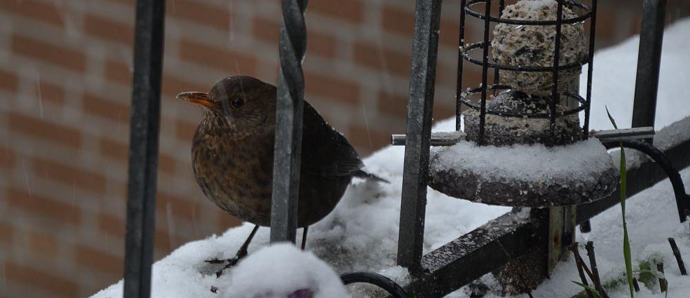 2016-02-15-nottuln-bird