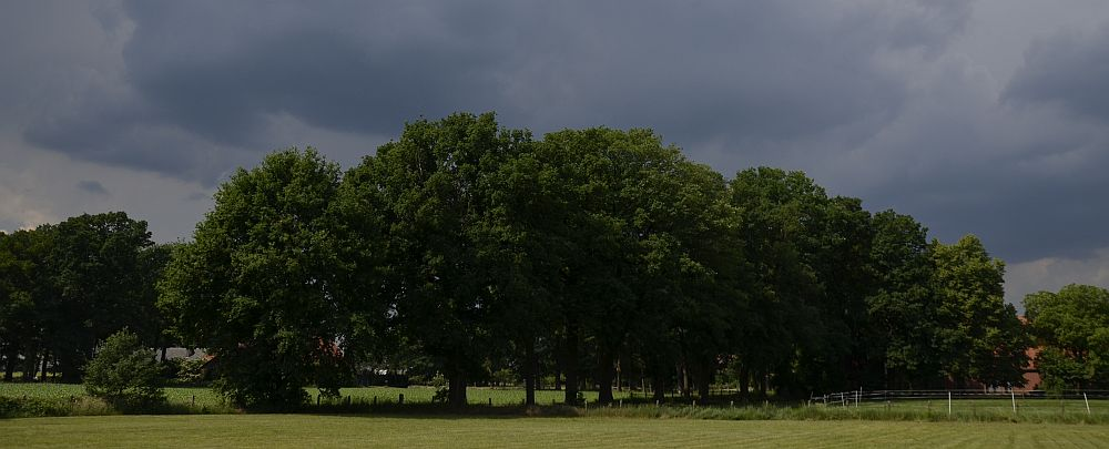 Oak Trees and Thunderstorm Sky