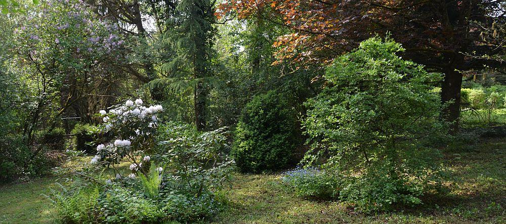 Our former garden