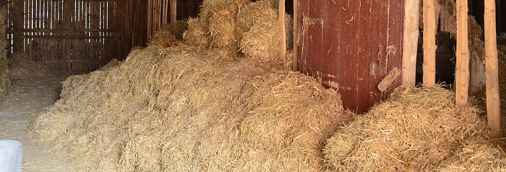 Old straw in the barn in early August