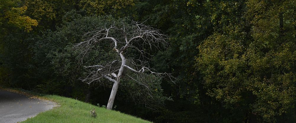 away-tree